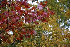 Autumn Colors 2011