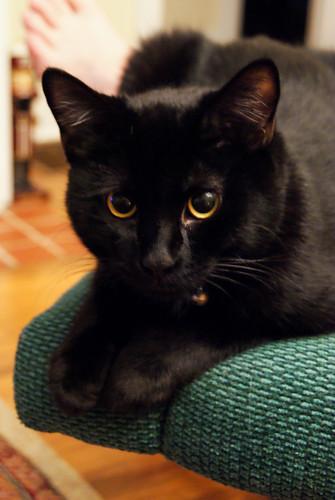 364: Black cat