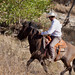 Paso Robles Horse Ranch 4