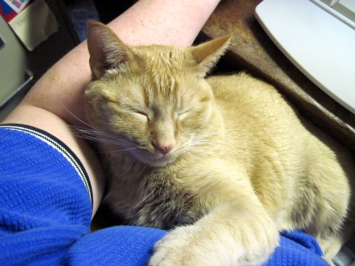 Cat Computing 3