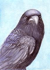 ATC: Crow (traded)