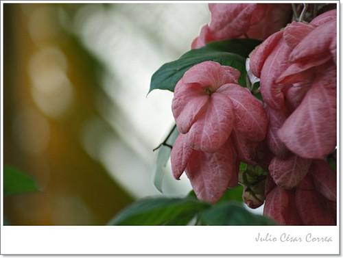 Silencio en flor by Julio César Correa