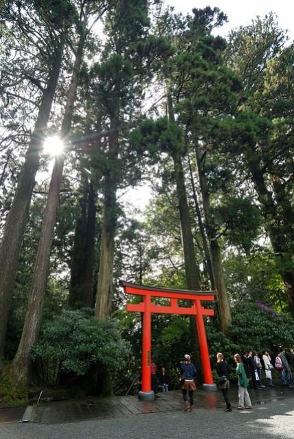 不知為何,神社附近的樹木都很高大
