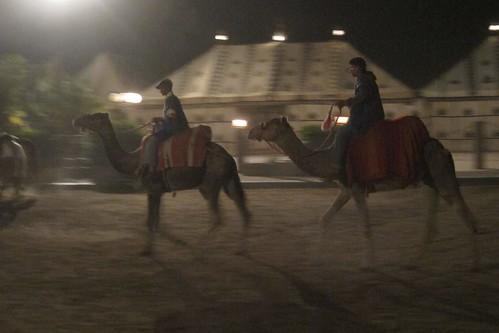 Marrakech Fantasia camels Morocco