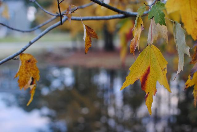 [313/365] Leaves, Lake