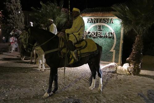 Marrakech Fantasia horses Morocco