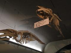 An Afternoon at the Nagoya Aquarium