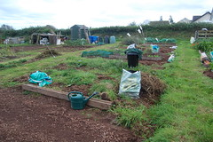 2011 10 16_allotment_0008
