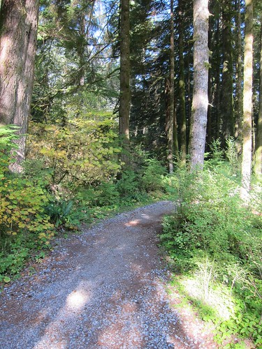 Old Growth Trail