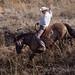Paso Robles Horse Ranch 6