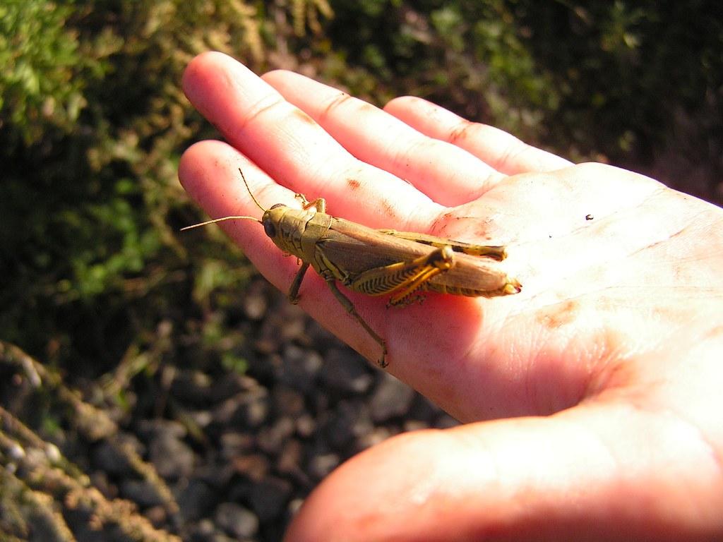 Not so hasty, Grasshopper