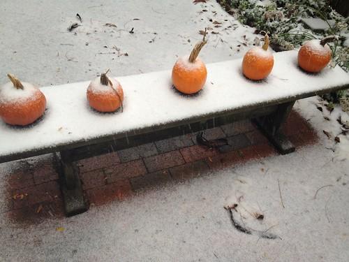 Pumpkins in the snow by martha_jean