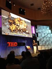 Paul Stamets at TEDMED2011