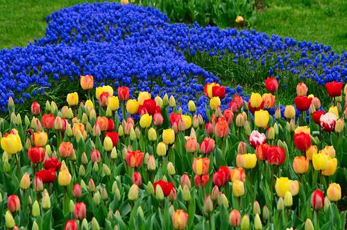 Parque Emirgan. Festival del tulipán de Estambul.
