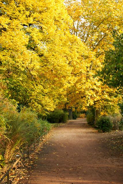 Herbst im Großen Garten Dresden