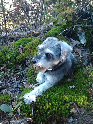Moss, a Perfect Dog Bed