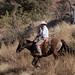 Paso Robles Horse Ranch 9