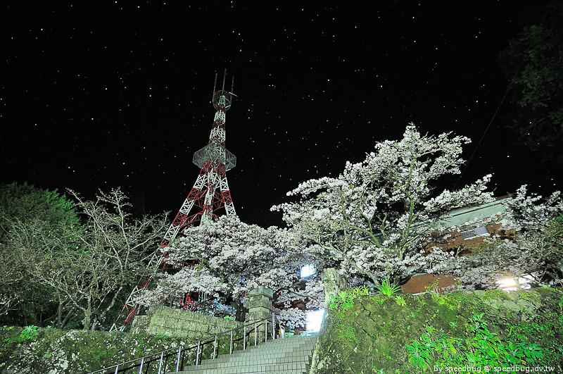 阿里山櫻花季6