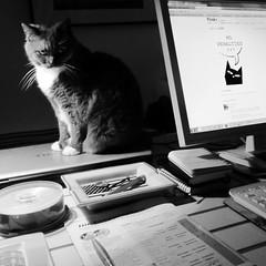 Cat Petition