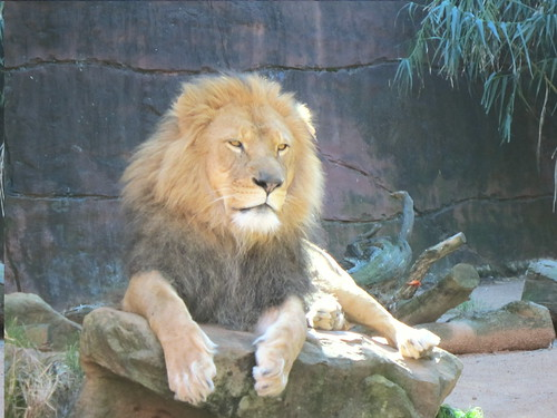 This lion was posing perfectly.
