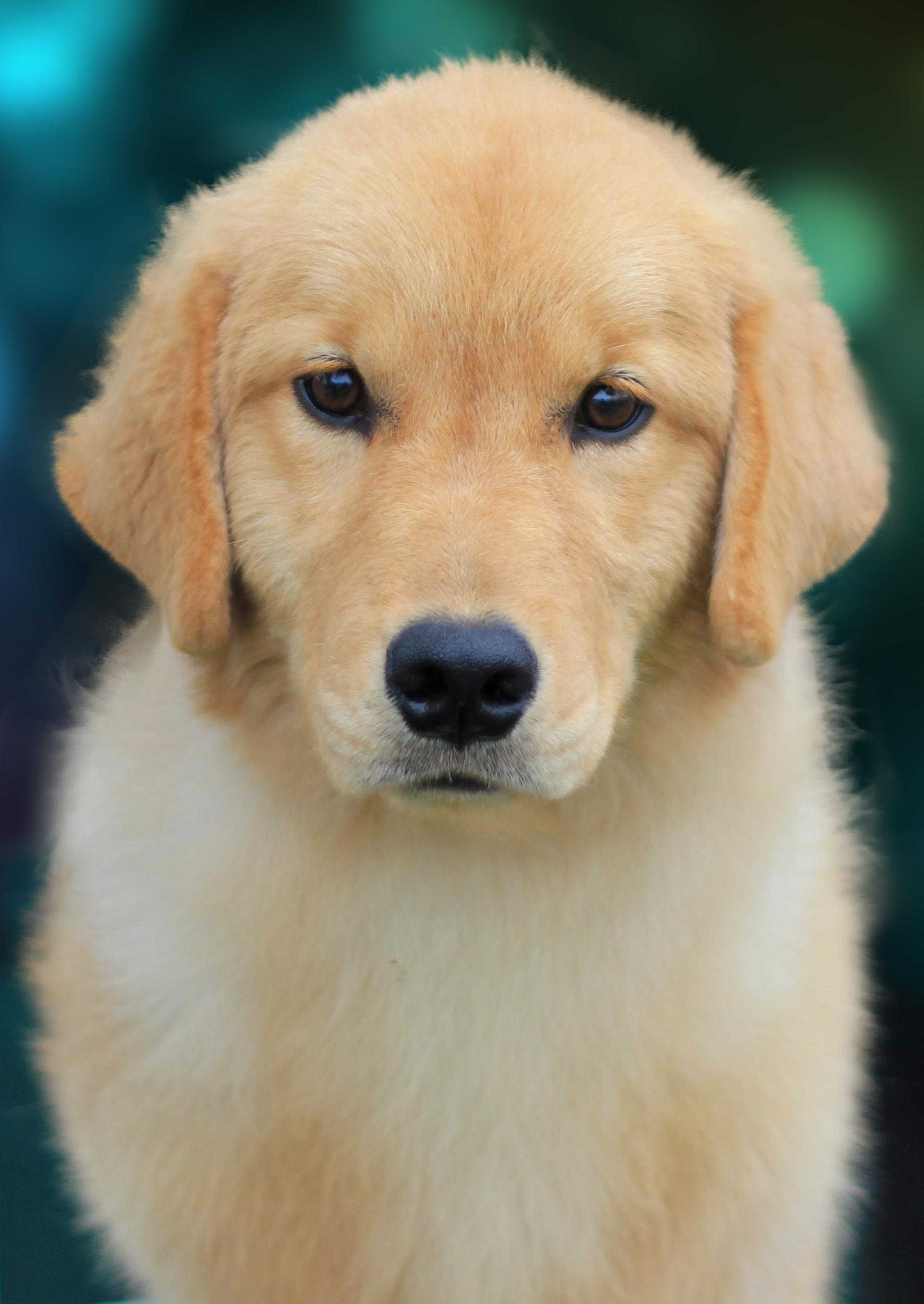 Pet Vocabulary Translating Spanish To English Words