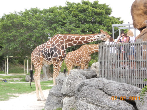 Zoo Miami July 2, 2011