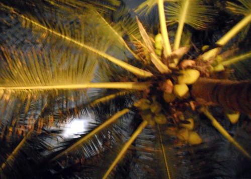 Tulum at night - Coconut tree by moonlight