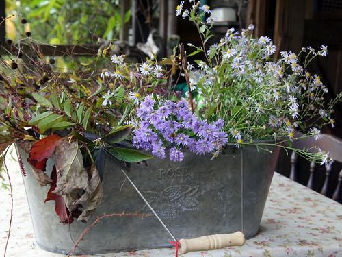 花フェスタ記念公園 ターシャの庭にて