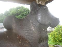 Nandhi in font of Kailasanathar shrine 5