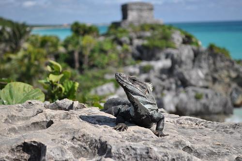 Tulum - Day of the Iguana