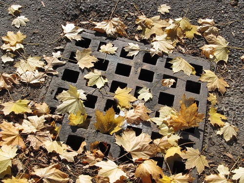 Storm drain with fallen leaves