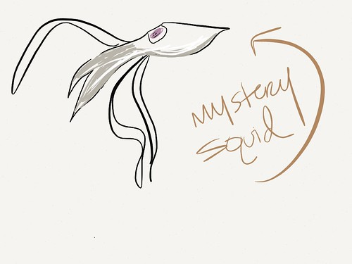 Day 130 of Project 365: Mystery Squid