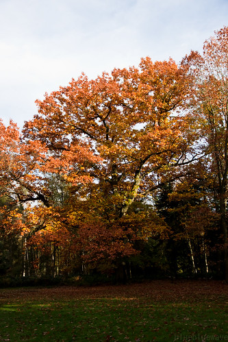 Autumn colors at the Arboretum Tervuren