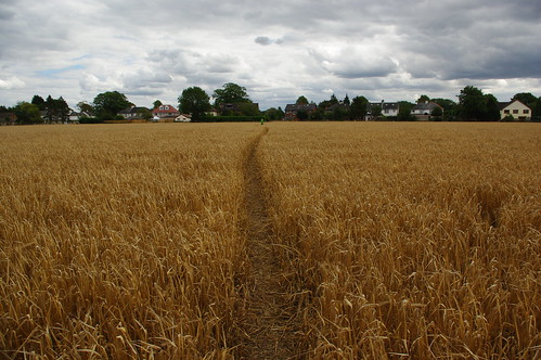 20110814-28_Footpath through the Wheat - Cawston Rugby by gary.hadden