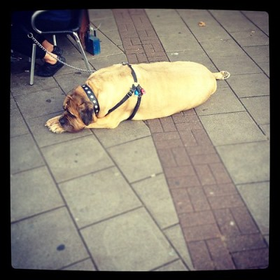 SLEEPING GIANT #london #wanstead #dog