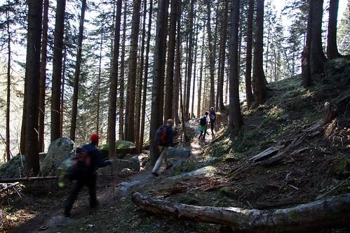 Attraverso la luce della foresta