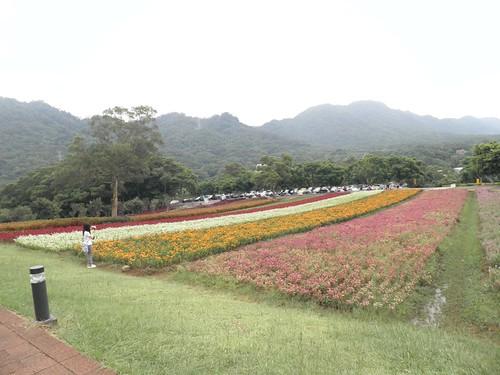 大溪花海農場5