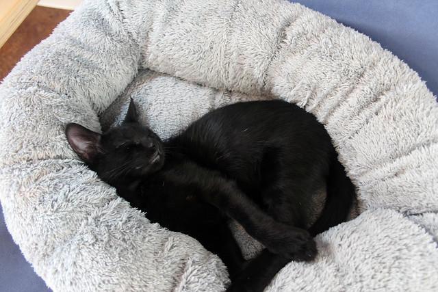 Sleeping Margot