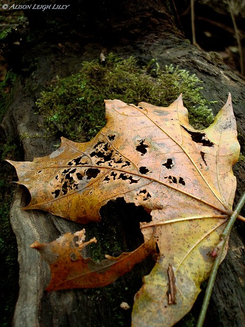 Steampunk Leaf