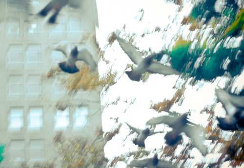 Pigeon Blur on the Abstact