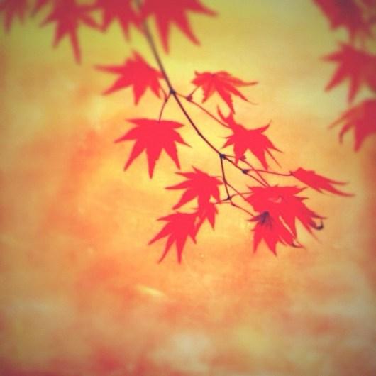 #autumn #pictool #instagramer #tiltshiftgen