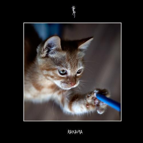 La curiosità uccide il gatto - Curiosity kill the cat