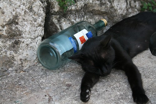 Drunk Cat lying down in Lucchio Hill Top village