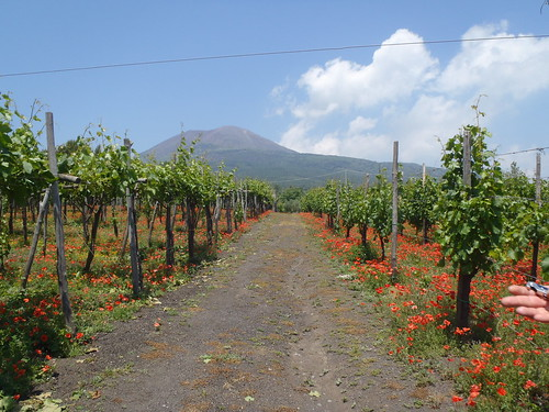 The Vineyard & Mount Vesuvius