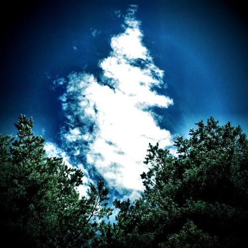 Rabo de nube. Foto: Sunshineband