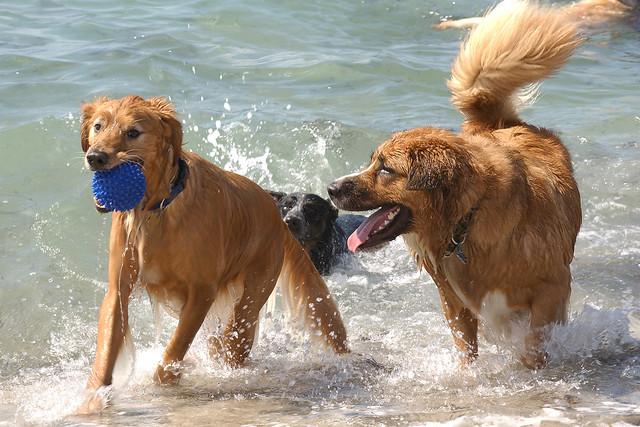 Paw_Playground_Dogs