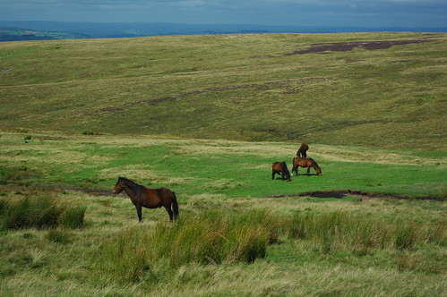 20110821-15_Welsh Ponies on Craig Cerrig Gleisiad by gary.hadden