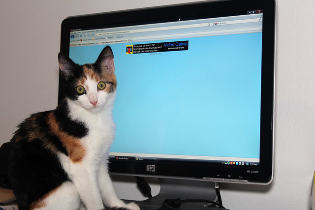 Maeby's new favorite website
