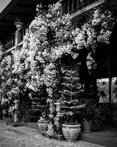Overflowing flowers.