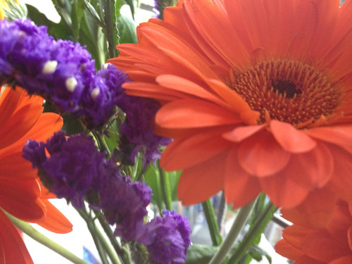 University flowers... by Princess Bala Vera